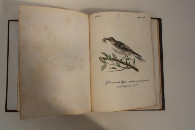Restauration de la reliure d'Ornithologie d'Europe